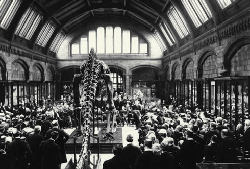 Image: Natural History Museum. The grand welcoming of Dippy to the museum exhibition in 1905