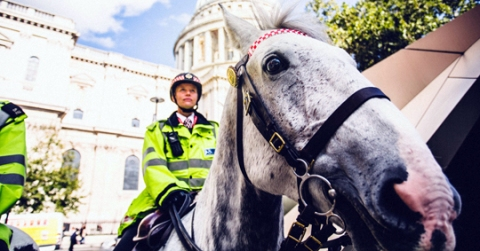 City of London Police mounted unit providing the escort for the reburial of King Richard III in Leicester. Image: Ashley Lewis
