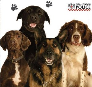 Meet the finest of the City of London Police. City Police dogs will always be your friend if you are on the right side of the law. Image: City of London Police https://twitter.com/CityPoliceDogs