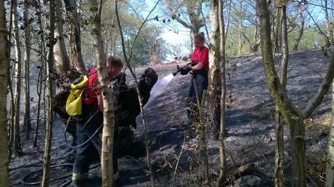 LFB firefighters dousing glassland blaze in Abbey Wood. Image: @LondonFire