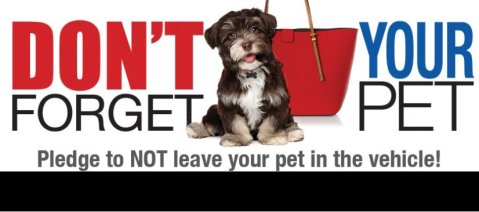 Public information poster to protect dogs from overheating and dying in cars. Image: @