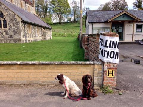 'Paddy & Murphy in rural Wiltshire'. Image: @plaindweller.