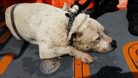 Ollie the dog- rescued by RNLI Chiswick. Image: RNLI