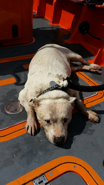 Ollie the dog. Wet but safe courtesy of RNLI Chiswick. Image: RNLI