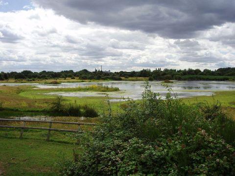 800px-Chase_Nature_Reserve,_London_Borough_of_Barking_&_Dagenham,_RM7_(2682552177)