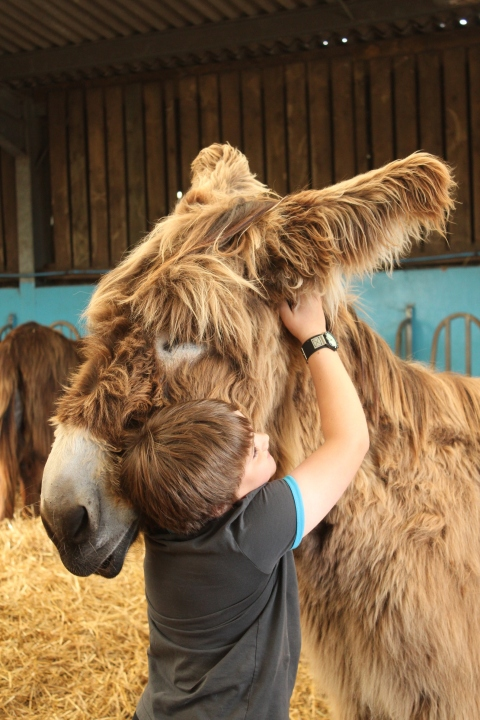 Dominic hugs Noah the Poitou donkey. Image: copyright of the Donkey Sanctuary LR