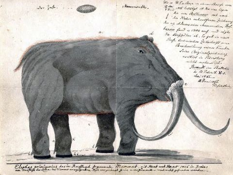 "Artist's impression of a woolly ""mammoth"" from the early 1800s, courtesy Rhino Resource Center"