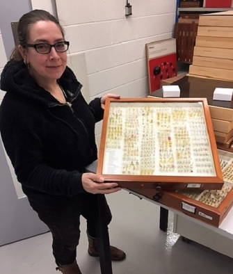 Erica McAlister with culex pipiens molestus specimen from all over the world. IMAGE: Nina Kruse