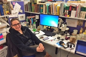Dr Erica McAlister specialise in flies and flees. Mosquito is a form of fly. IMAGE: Nina Kruse